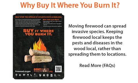 image for Frequently Asked Questions to Why Buy It Where You Burn It