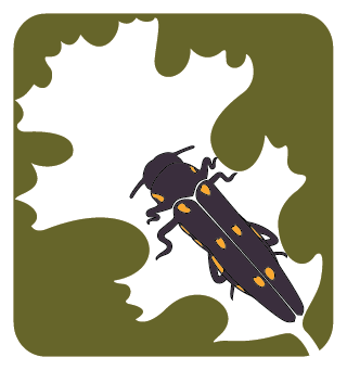 Goldspotted Oak Borer Program